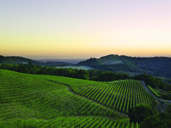 2014 Kamen Wine Dinner.pdf
